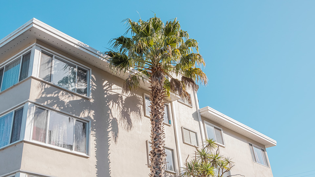 palm tree in front of white building in the daytime